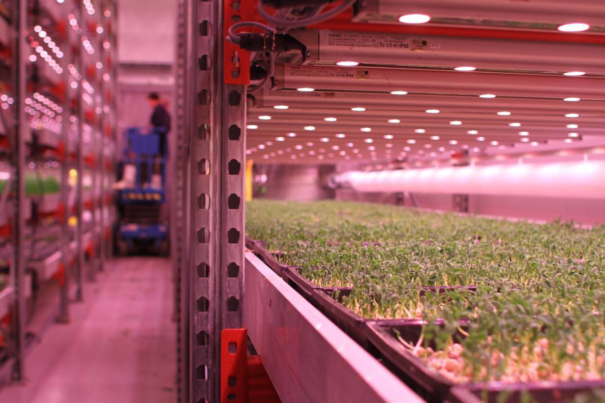 With urban grit and pink lights london warehouse farms for Taylor fish farm