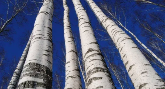 Producers – North Pennine Birch