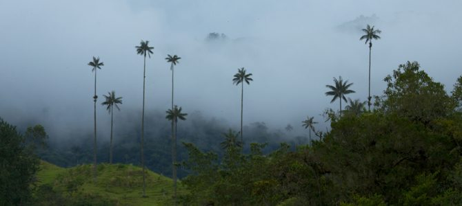 Colombia takes 'unprecedented' step to stop farms gobbling forests